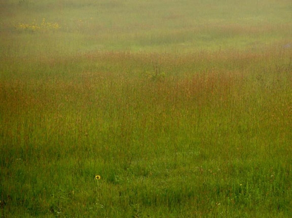 Blooming Prairie, Homestead National Monument