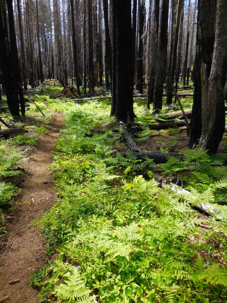 Mount Adams Wilderness
