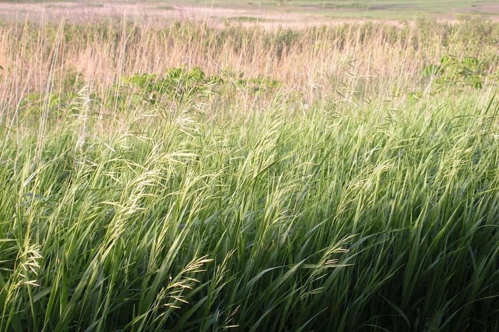 Tall Grass Prairie, Nebraska.
