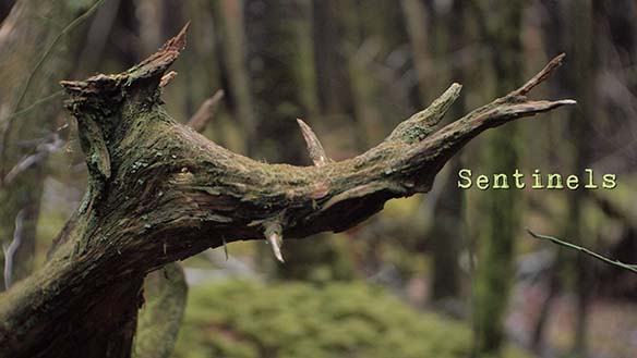 "Dead tree branch with title ""Sentinels"""
